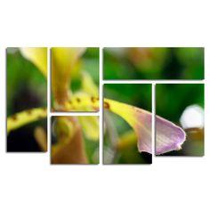 'To Touch an Orchid' by Kurt Shaffer 6 Piece Canvas Art Set