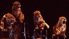 cirkuszi állatok – Google Kereső Google