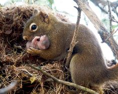 The Kindness of Squirrels: What adoption in the wild tells us about the presence—and the limits—of altruism in the animal kingdom.