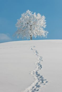 Footprints in the snow - so pretty!  I would love to have this as a print for my wall.
