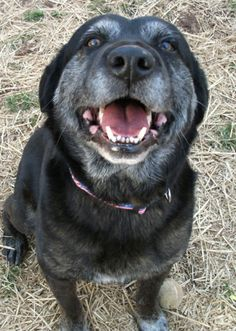 "... dog.""-... Lost Dog Rescue Arlington"