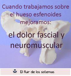 Cuando trabajamos el esfenoides mejoramos el dolor fascial y neuromuscular
