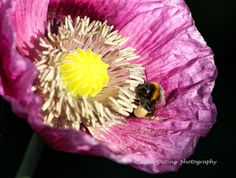 Busy Bee 04 by Lewis Outing on 500px