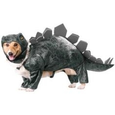 Stegosaurus Dog Costume. gonna have to get the boss to pick this up for our store.