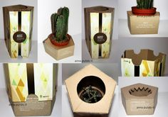 cactus packaging Seed Packaging, Flower Packaging, Brand Packaging, Gift Packaging, Packaging Design, Packaging Ideas, Candy Gift Box, Wine Gift Boxes, Candy Gifts