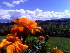 Sunny colours