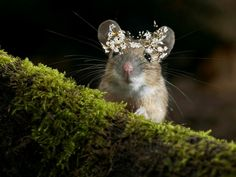Mouse with flower crown