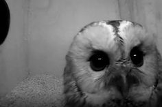 Beleef de Lente | Vogelbescherming Owl, Bird, School, Animals, Animales, Animaux, Owls, Birds, Animal