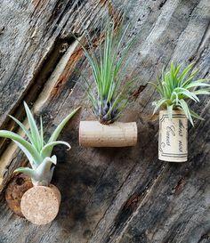 Tillandsien Kaufen deko ideen tillandsien bromelien behälter baumstumpf blumen deko