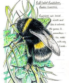Bee Facts, Arte Sketchbook, Colossal Art, Nature Journal, Bee Happy, Bees Knees, Flora And Fauna, Bee Keeping, Illustrations