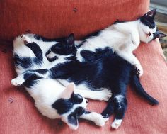 kittens' nap | Flickr - Photo Sharing!