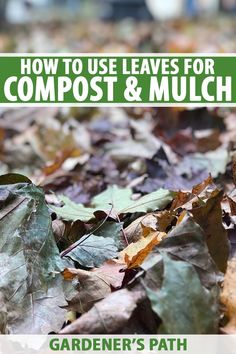 """When life gives you leaves, why not make compost? Autumn leaves are perfect for making a well-balanced compost bin. Instead of putting leaves on the curb as """"waste,"""" transform them into black gold for your garden. Learn more about turning leaves into compost at Gardener's Path. #composting #autumnleaves #gardenerspath Gardening For Beginners, Gardening Tips, Compost Mulch, Composting At Home, Soil Improvement, Hydroponic Gardening, Grow Your Own Food, Get Outside, Growing Plants"""
