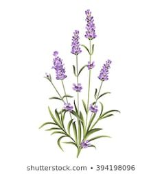 The lavender elegant card with bouquet of flowers and text. Lavender garland for. Botanical Flowers, Lavender Flowers, Botanical Prints, Lavander, Watercolor Bookmarks, Watercolor Flowers, Watercolor Art, Botanical Drawings, Tropical Flowers