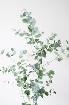 Plant Series – Prints by Belgium Designer Anniek Beije of Studio Joop