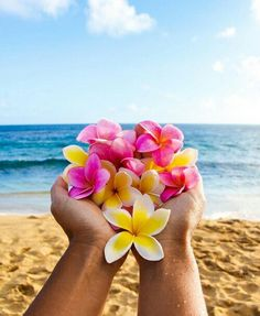 Tropical flowers // plumeria // beach life // all great sources of inspiration for Coco Moon Hawaii via