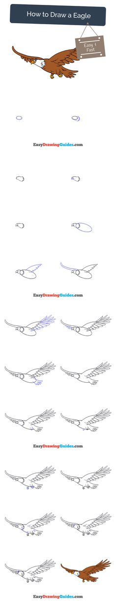 Learn How to Draw an Eagle: Easy Step-by-Step Drawing Tutorial for Kids and Beginners. #eagle #drawing #tutorial. See the full tutorial at https://easydrawingguides.com/how-to-draw-an-eagle/