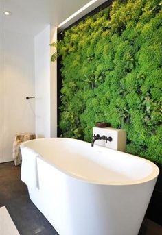 Creëer je eigen oase met planten voor binnen. Of het nou de badkamer, keuken of woonkamer is, een beetje groen in huis doet iedereen goed!