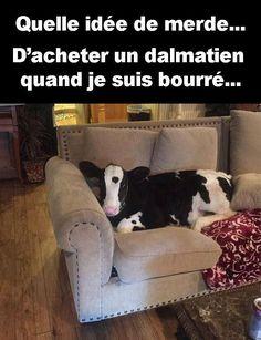 quelle idée de merde d'acheter un dalmatien quand je suis bourrée !!! #blague #drôle #drole #humour #mdr #lol #vdm #rire #rigolo #rigolade #rigole #rigoler #blagues #humours