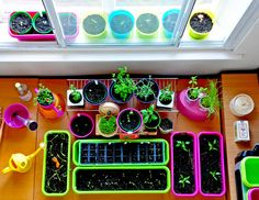 Desktop Garden One Month Review. Very inspiring blog about a tiny vegetable garden, shows how anyone can grow their own food even in a small appartment.