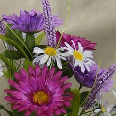 1 Pc, Gerbera & Daisy Mixed Bush, Pink fuchsia
