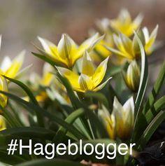 Hageblogger.no