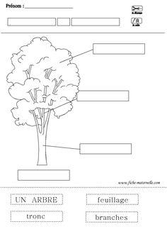 fiche sur l arbre Science Vocabulary, Teaching Science, Math For Kids, Land Art, Kids Education, Science Nature, Elementary Schools, Homeschool, Preschool