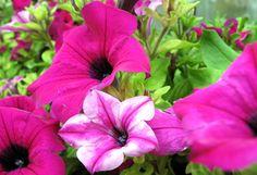 de moooiste roozen bloemen