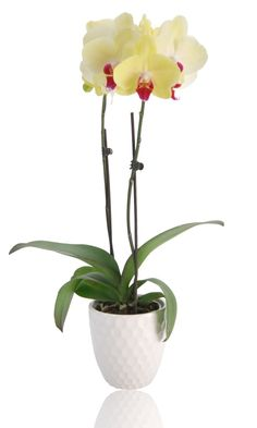 Rid Your Orchid of Slimy Leaves