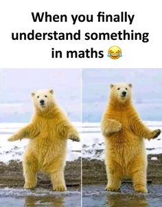 """Funny Miscellaneous Memes For Anyone Who Needs 'Em - Funny memes that """"GET IT"""" and want you to too. Get the latest funniest memes and keep up what is going on in the meme-o-sphere. Math Memes Funny, Memes Estúpidos, Funny School Jokes, Some Funny Jokes, Crazy Funny Memes, Funny Animal Memes, Stupid Memes, Cute Funny Animals, Funny Relatable Memes"""