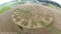 BREAKING – Stargate Like Crop Circle Appears In Ansty, Wiltshire Overnight…