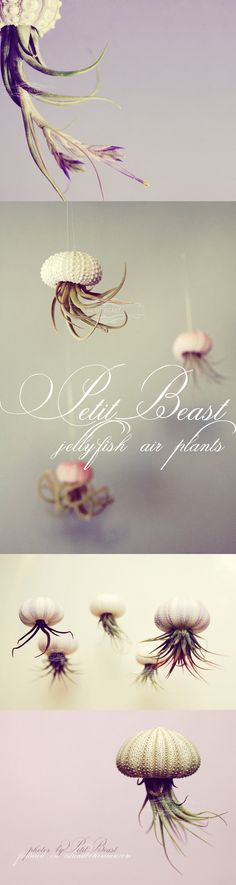 Make air plants look like jelly fish by hanging upside down. Must try this and paint the vases I use.