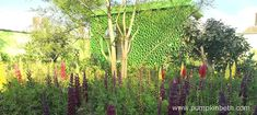 Dr Catherine MacDonald and the Seedlip Garden, at the RHS Chelsea Flower Show 2018 - Pumpkin Beth Pea Shingle, Chelsea Flower Show 2018, Different Bees, Welcome To Yorkshire, Growing Peas, Garden Features, Colour Combinations, Edible Garden, Growing Vegetables