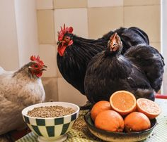 Muesli-Bio-poules