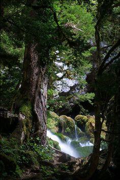 *•.. a Peaceful Place ..•*