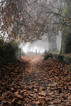 foggy autumn day in Kingston Upon Thames ↣✿ Autumn Day, Autumn Leaves, Autumn Song, Dark Autumn, Winter, Seasons Of The Year, Pathways, Belle Photo, Mother Nature