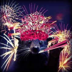 Lucy wishes you a Happy New Year! #HottestCollegeInAmerica