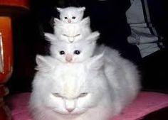 Картинки по запросу смешные котики фото