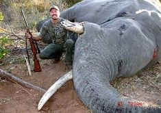 Sign the petition demanding the U.S. government stop the plan to allow trophy hunters to slaughter elephants and bring their carcasses as trophies into the country.