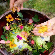 Consommez les fleurs du potager