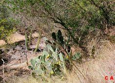 Cactus land Bessan Hérault 34