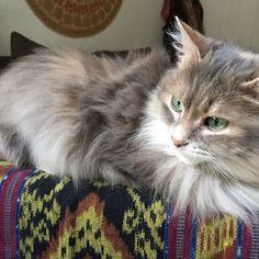 Ms Kitty Kitty Cat | Pawshake