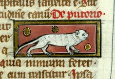 smiling polecat; Thomas of Cantimpré, Liber de natura rerum, France ca. 1290. Valenciennes, Bibliothèque municipale, ms. 320, fol. 77r