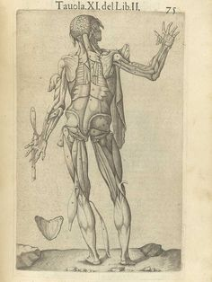 Page 75 of Juan Valverde de Amusco's Anatomia del corpo humano, 1560 featuring the backside of a flayed cadaver with flaps of muscle in the arms, hands and legs fanned away to reveal muscles underneath them. From the collection of the National Library of Medicine. Visit: http://www.nlm.nih.gov/exhibition/historicalanatomies/valverde_home.html
