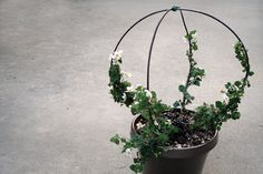 ❥ Make a Topiary in Less Than 20 Minutes