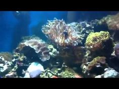 How to clear cloudy water in a reef tank by Paul talbot