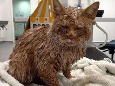 Una sventura o uno scherzo crudele? Questo gatto è stato trovato completamente ricoperto di cemento e i veterinari hanno fatto di tutto per salvarlo.
