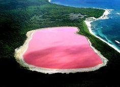 Lac Hillier dans l'île de Middle Island, dans l'archipel de la Recherche, en Australie-Occidentale Découvert en 1802 par le navigateur britannique Matthew Flinders, le lac mesure 600m x250m, est cerclé d'un liseré de sels blancs, entouré d'eucalyptus vert foncé et séparé de l'océan par un cordon de sable blanc. La couleur rose de ses eaux serait due au développement de bactéries et d'algues particulières qui se développent là en raison des caractéristiques chimiques d'une eau saturée en…