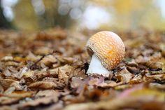 Toadstool Fantasy by Pep Talk Polly, via Flickr