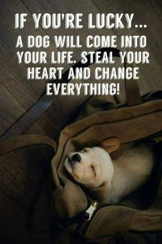 If you're lucky... A dog will come into your life, steal your heart and change everything! <3