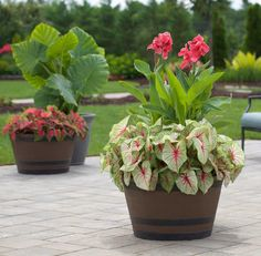 100 Beautiful DIY Pots And Container Gardening Ideas Garten Lawn And Garden, Garden Pots, Garden Oasis, Garden Fun, Terrace Garden, Water Garden, Container Gardening, Gardening Tips, Organic Gardening
